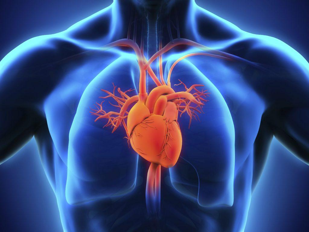 دستگاه قلبی عروقی