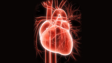 سیستم قلبی عروقی